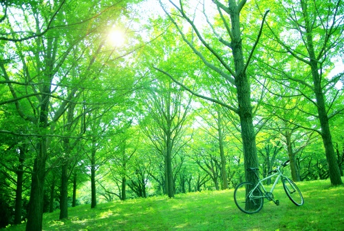 緑色 心理の印象(イメージ効果)